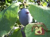 Szépítő, gyógyító őszi gyümölcsök - Tyukanyo.hu